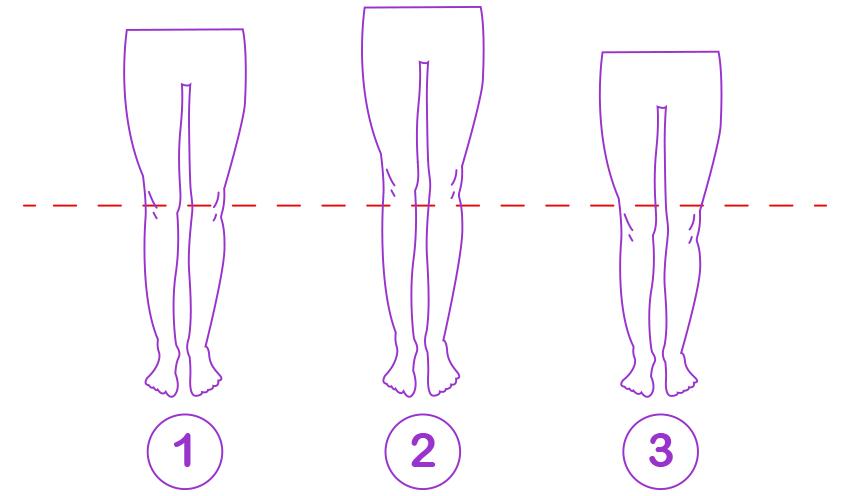 legs-proportion